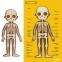 Магнитный пазл Тело человека MiDeer (MD2031) 6