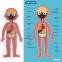 Магнитный пазл Тело человека MiDeer RUS (MD2031) 7